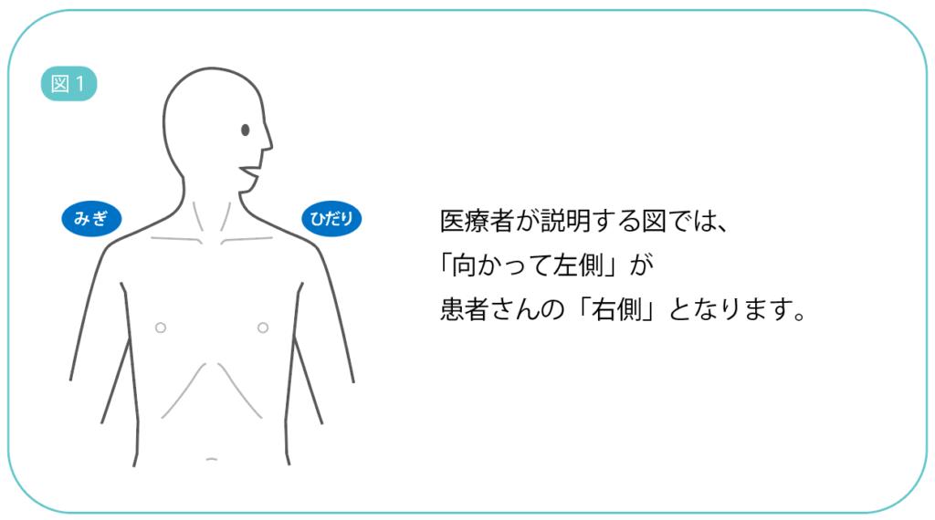 位置 肺 の